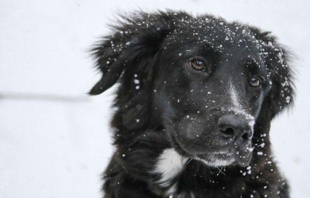 Зима / Katie Salerno / pexels.com