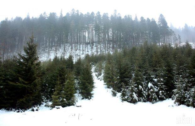 У Карпатах оголошено лавинну небезпеку / фото УНІАН