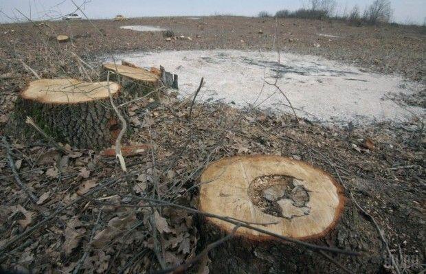 Указ подписан в целях сохранения лесного фонда Украины / Фото УНИАН, Владимир Гонтар