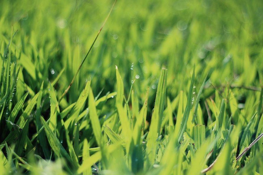 Якщо роса зранку — буде хороший урожай / фото unsplash.com