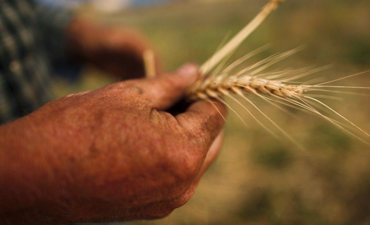 Мировые цены на продовольствие растут пятый месяц подряд / REUTERS