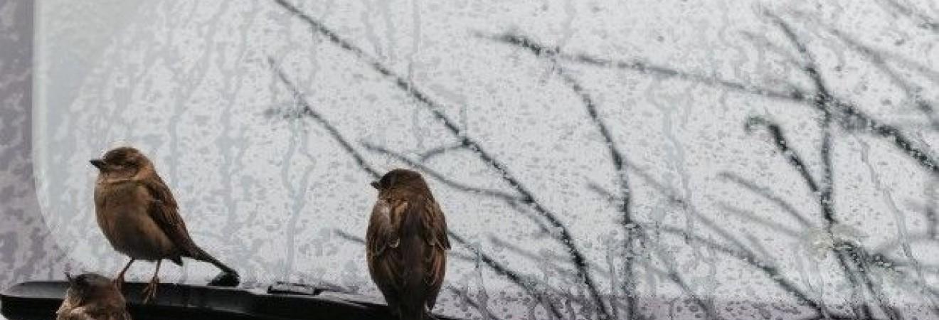В Гидрометцентре предупреждают о сильных дождях на западе Украины 27 октября