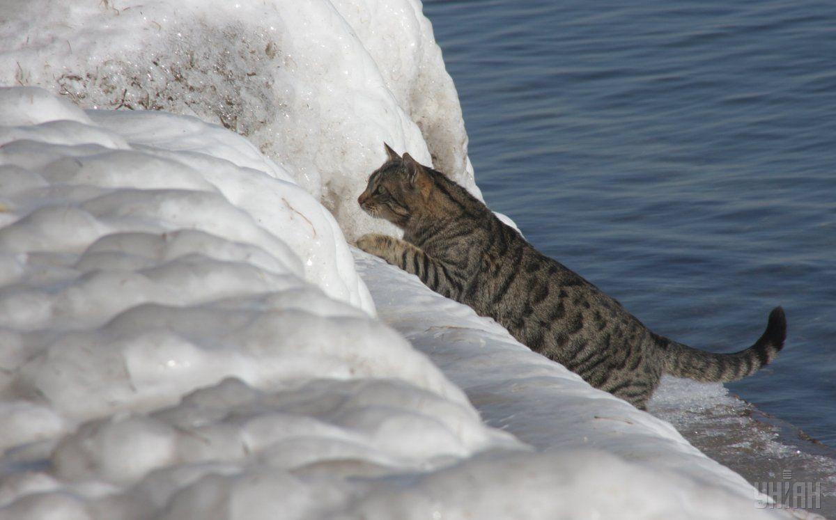Зима в Украине будет относительно теплой / Фото УНИАН