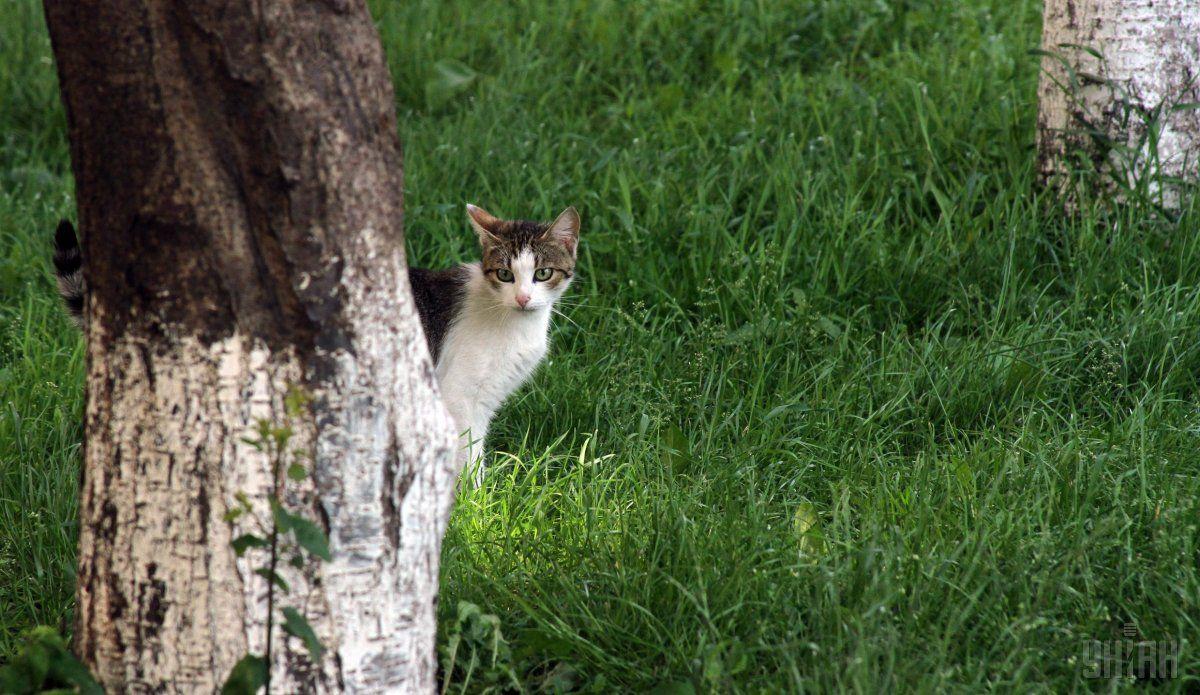 Сьогодні вКиєві без опадів / фото УНІАН