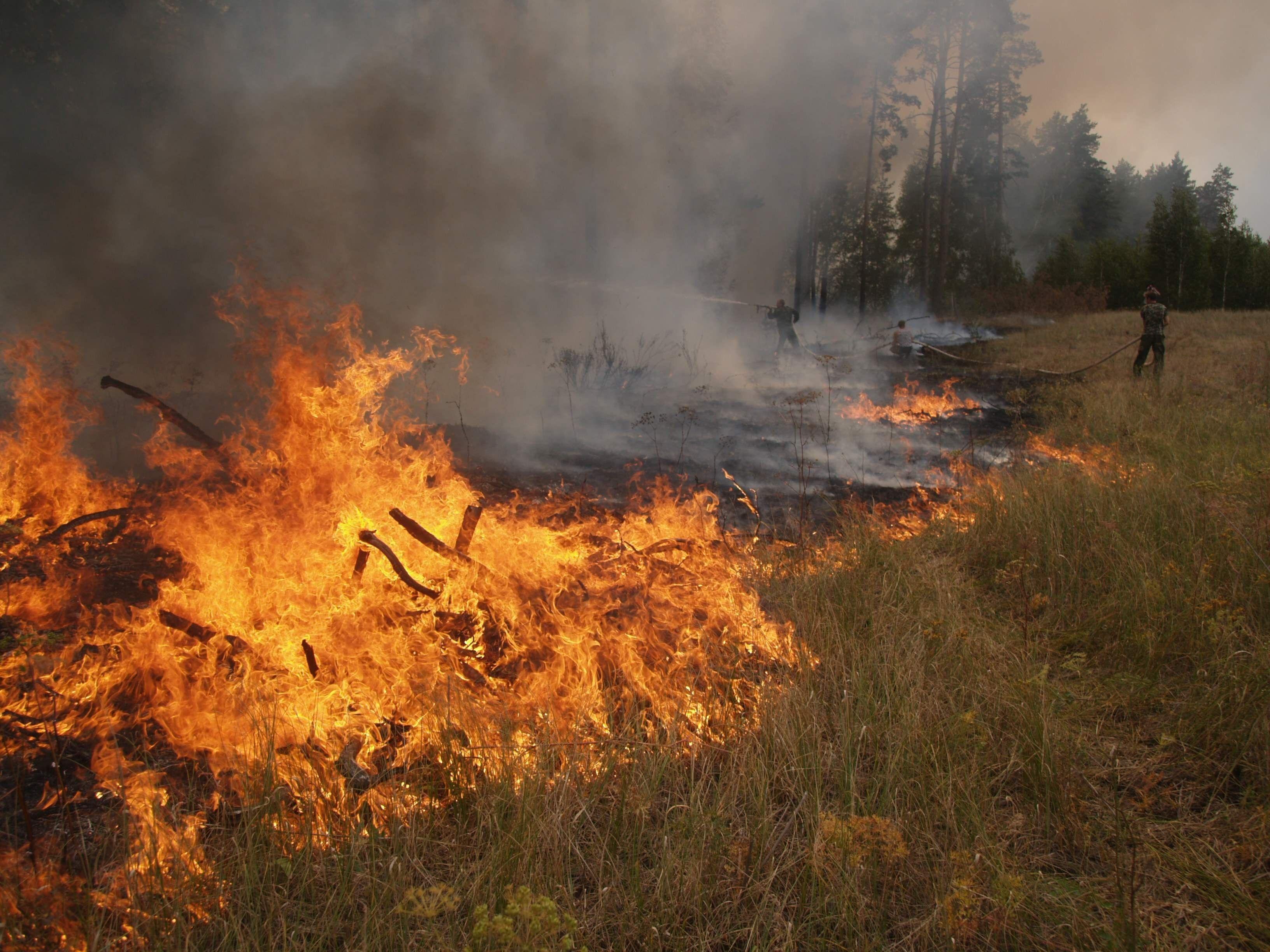 мчс гсчс пожар пожарники лес лесной / kharkiv.mns.gov.ua