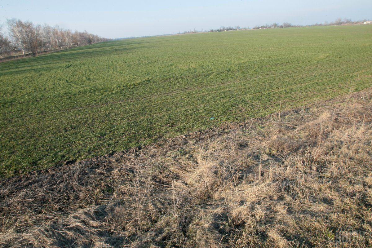 Фермер втратив весь врожай / фото УНІАН