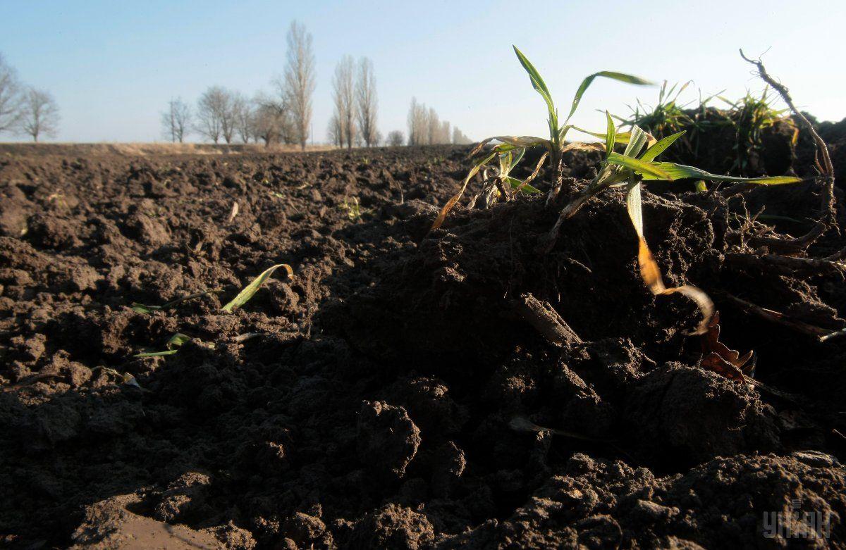 Правительство начало передачу сельхозземель в собственность общин / фото УНИАН