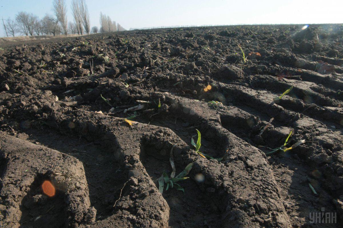 В Украине с 2001 года действует мораторий на куплю-продажу сельхозземель / фото УНИАН