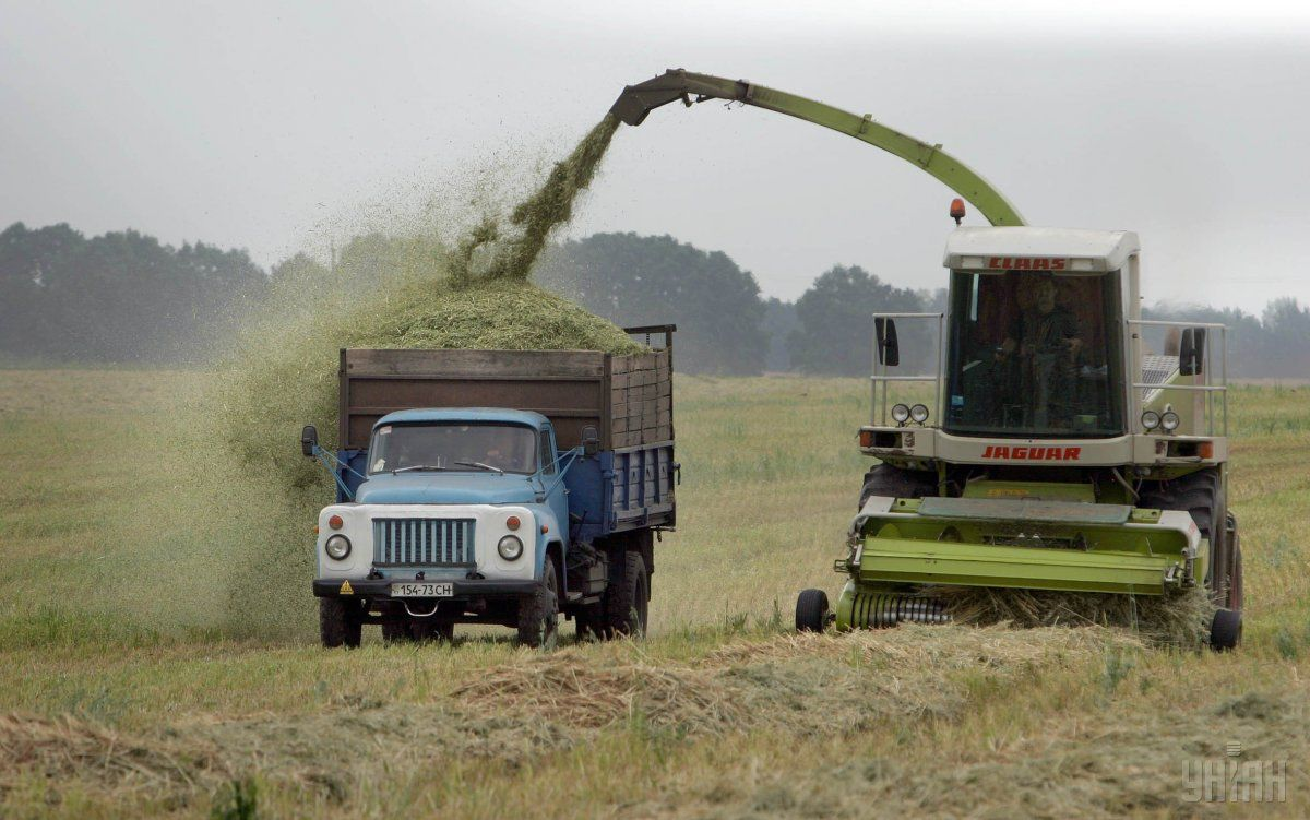 Новый ГОСТ на пшеницу могут ввести в действие летом / фото УНИАН