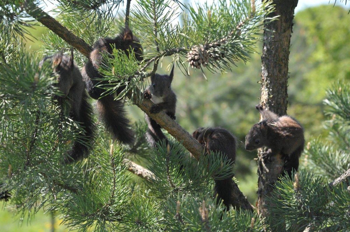 Невдовзі тварин планують випустити на волю / фото Facebook ECO Halych