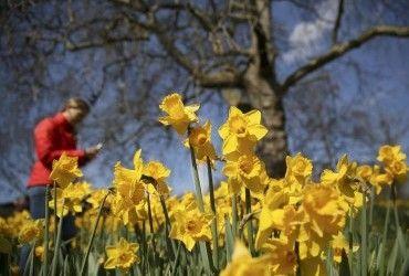 25 марта погода будет весенней, но еще с заморозками