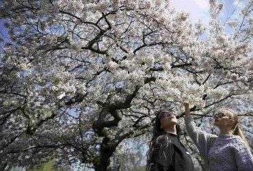 Синоптик рассказала, какой будет погода на майские праздники