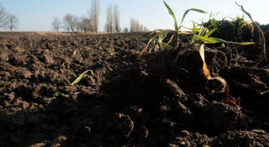 """В Днепре в экс- """"регионала"""" отобрали более 15 гектаров: пользовался незаконно"""