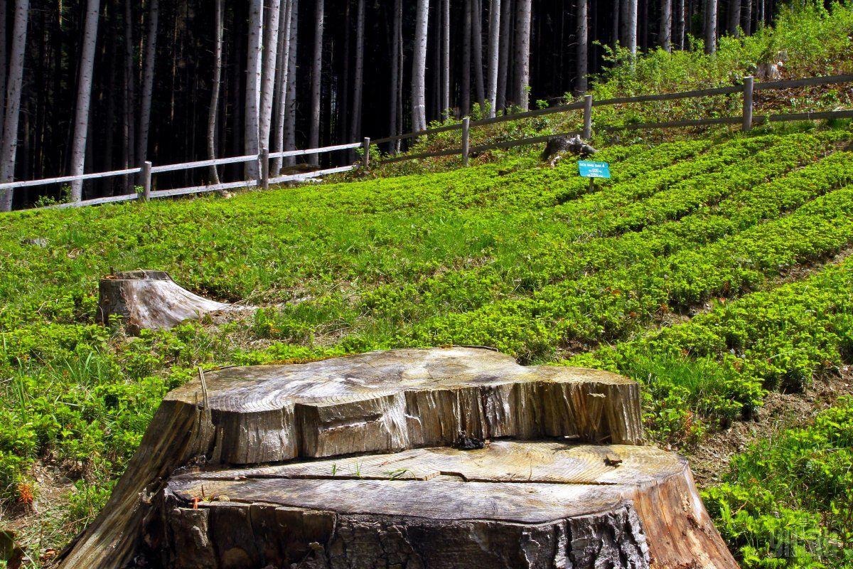 От отношения местных сообществ к вырубке леса зависит эффективность решения этой проблемы / Фото УНИАН