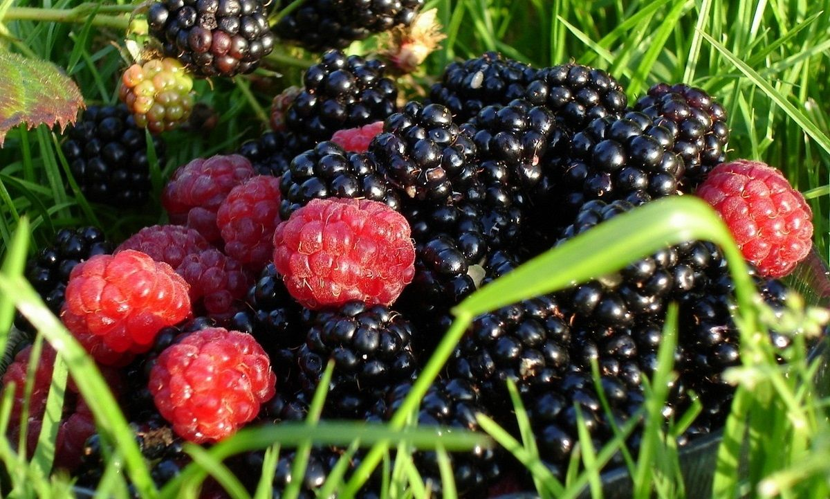 Ассоциация садоводов просит власти внедрить господдержку отрасли / lookw.ru