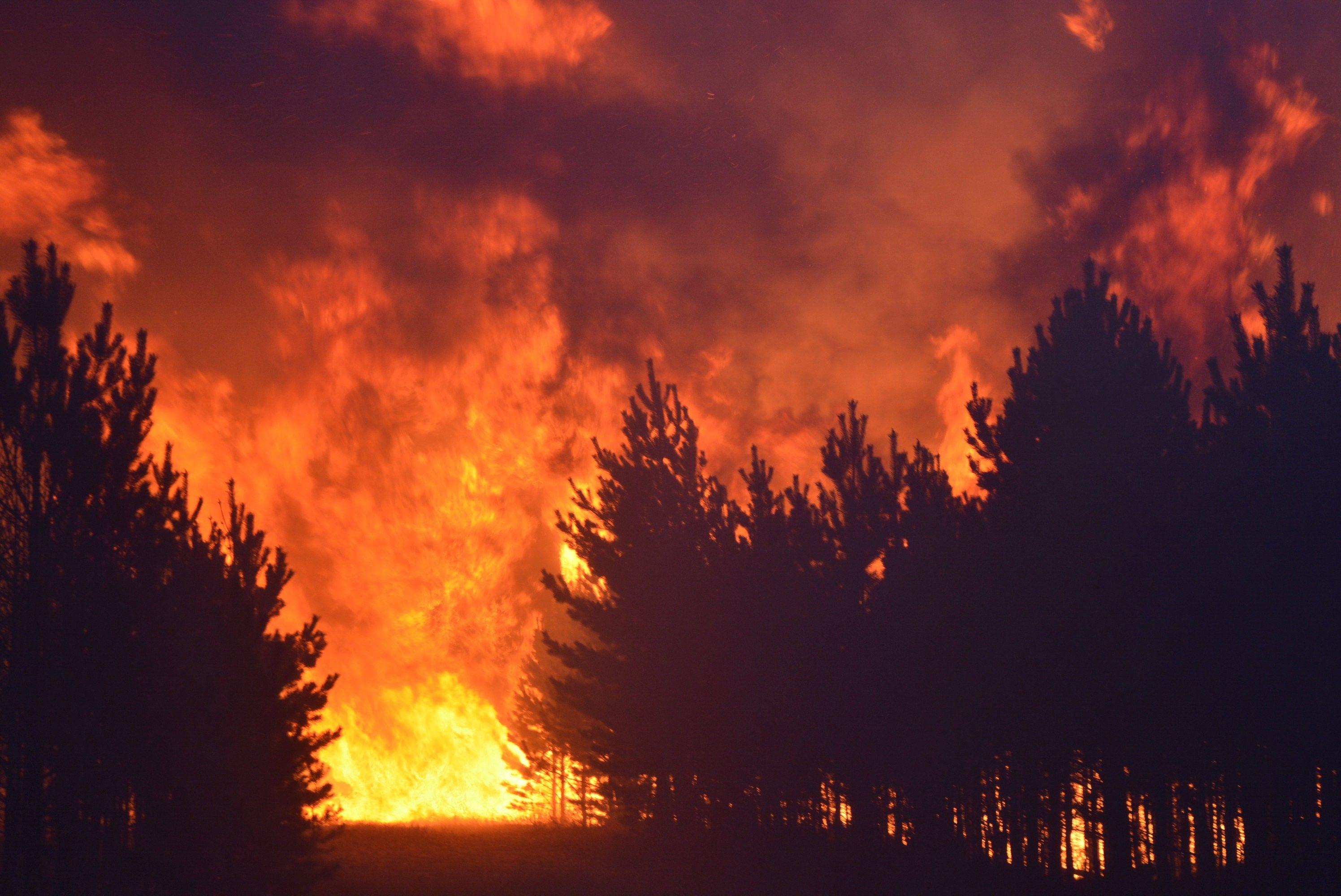 С 1 апреля по всей Тверской  области будут закрыты леса