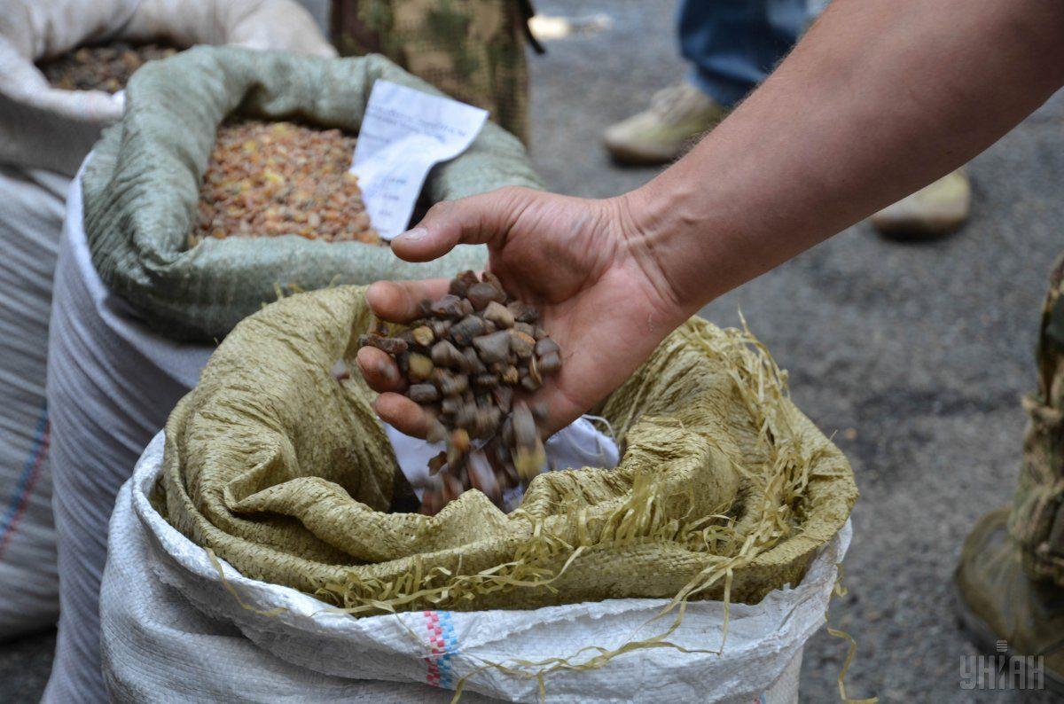 """В поліції розповіли про масштаби видобутку бурштину в """"бурштинових"""" районах / УНІАН"""
