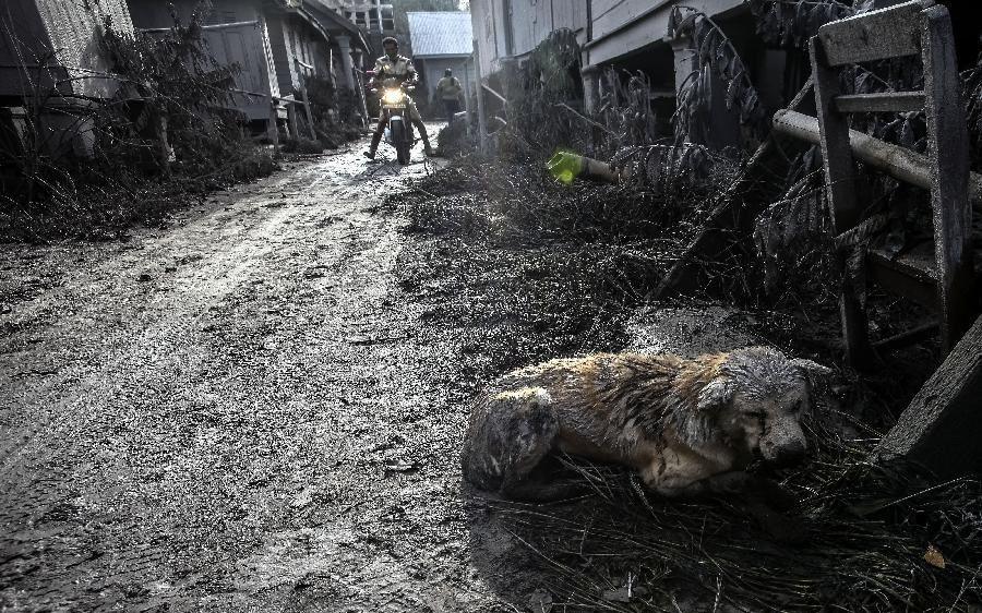 Фото www.news.cn