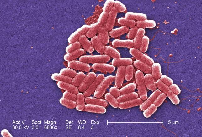 Ученые научились бороться с устойчивыми к антибиотикам бактериями / REUTERS