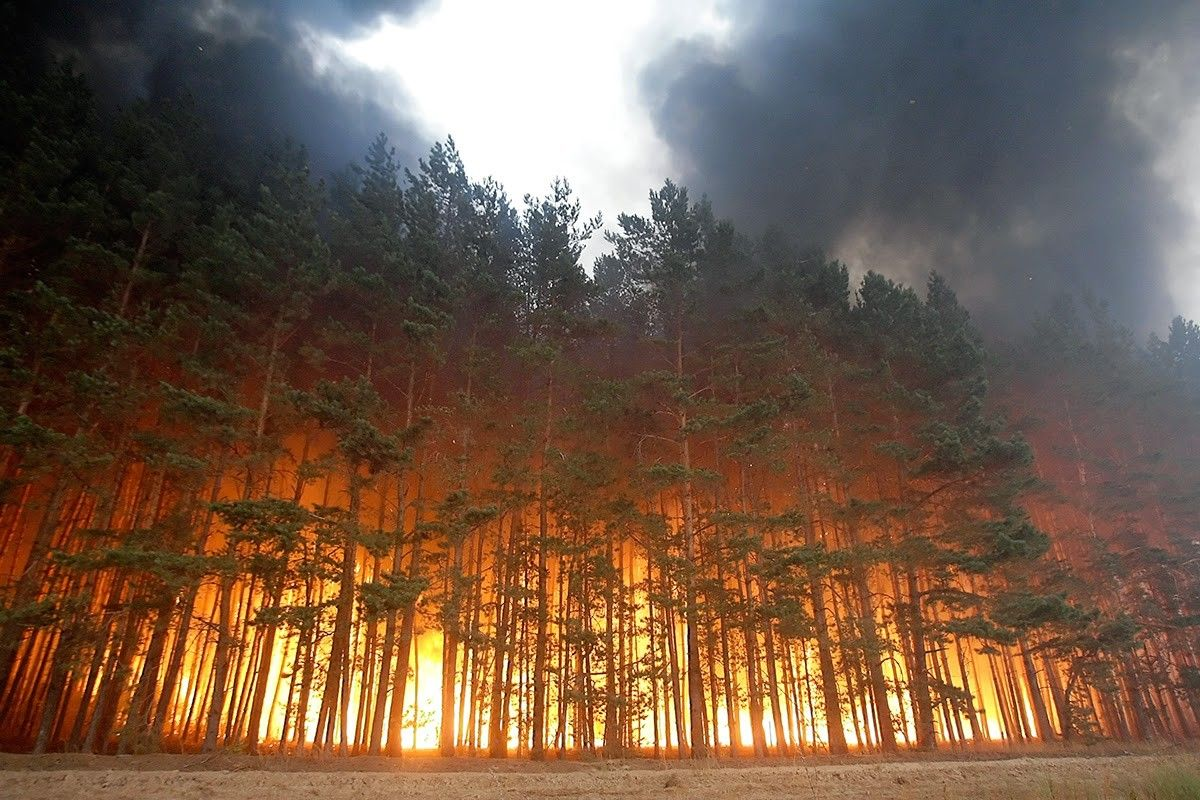 Лесной пожар / kazanfirst.ru