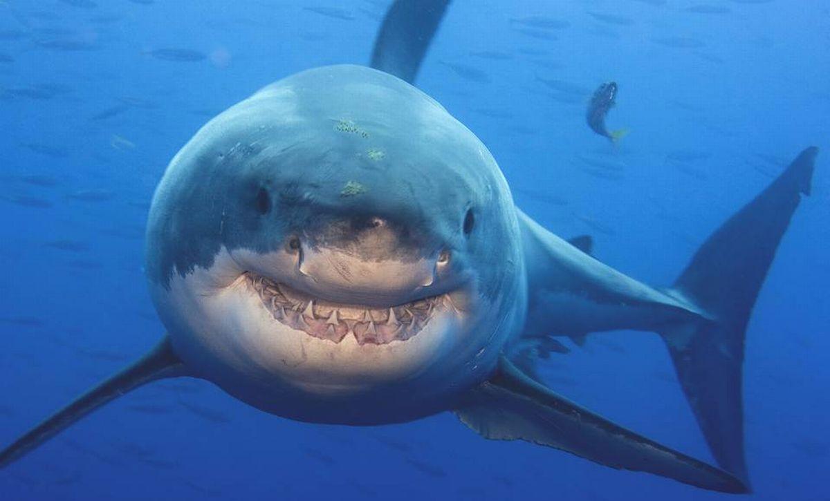 Discovery Channel запускает серию телепередач об акулах/ www.wsj.com