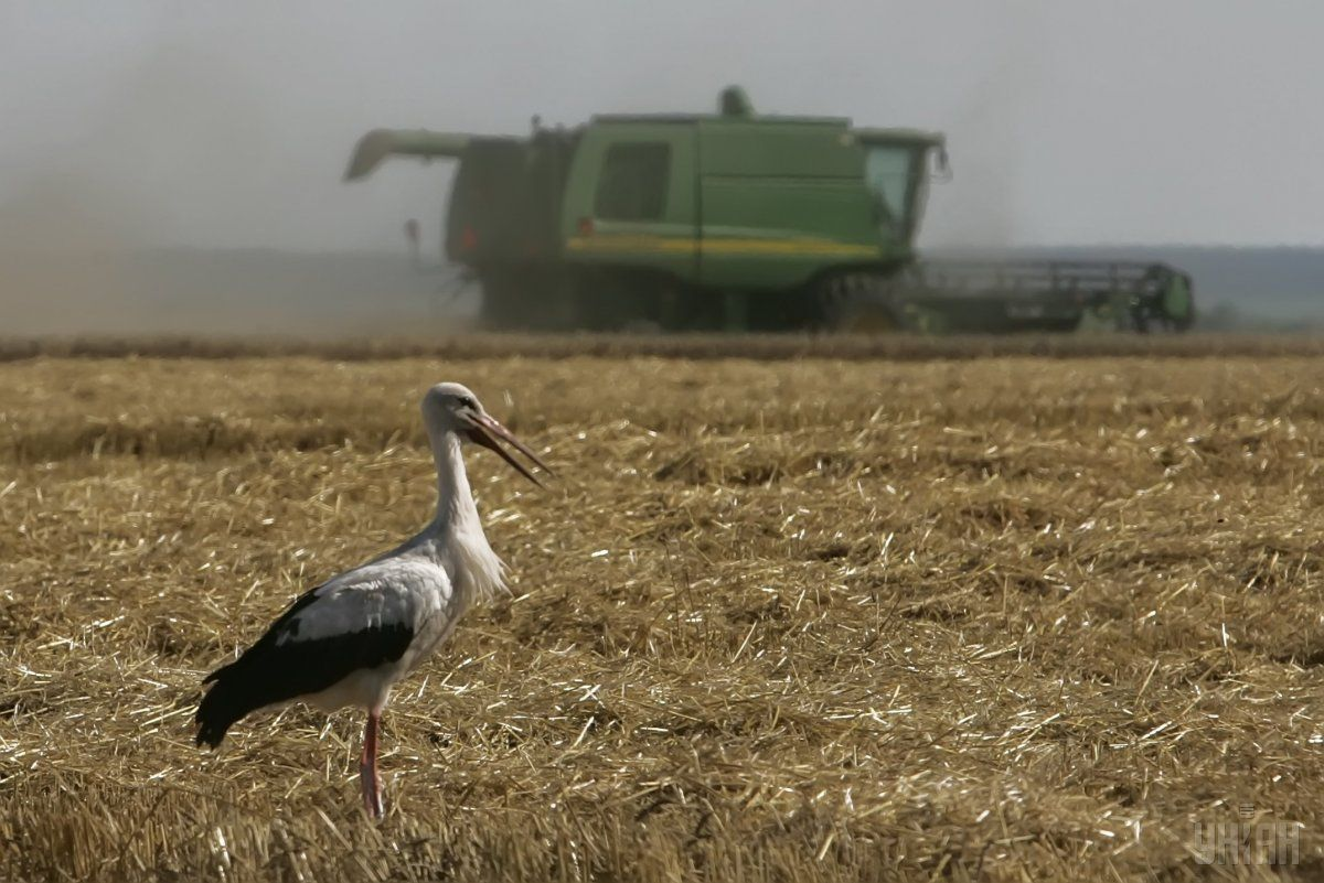 Капинвестиции в украинский агросектор рухнули до уровня 2009 года / фото УНИАН