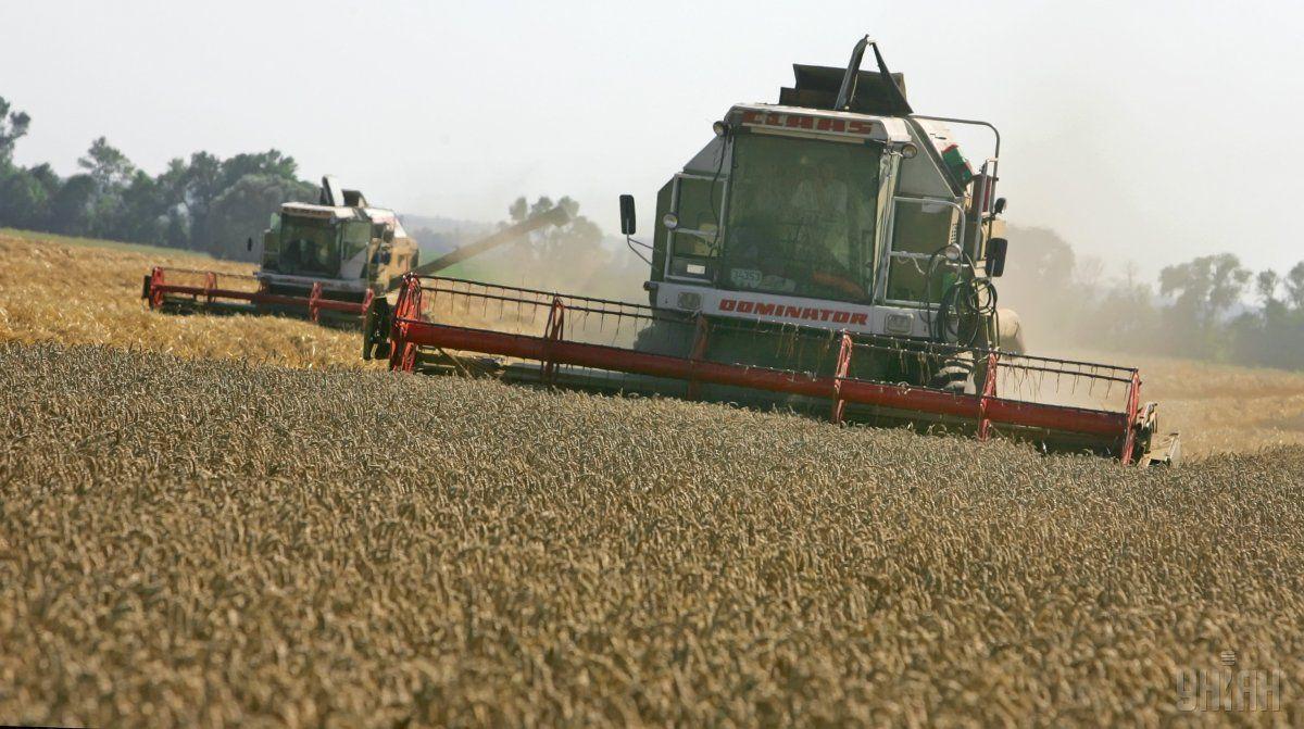 Експорт пшениці становив1,7 млн тонн / фото УНІАН
