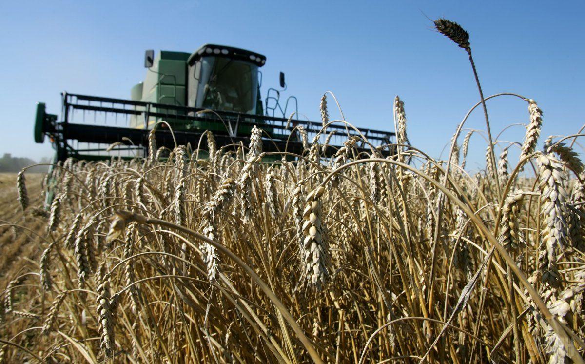 Пшеницы отправлено на экспорт 11,4 млн тонн / фото УНИАН