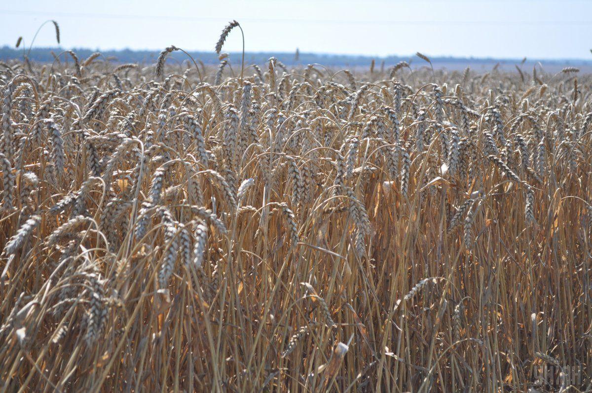 Украинские аграрии экспортировали продукции почти на 3 млрд долл. / фото УНИАН