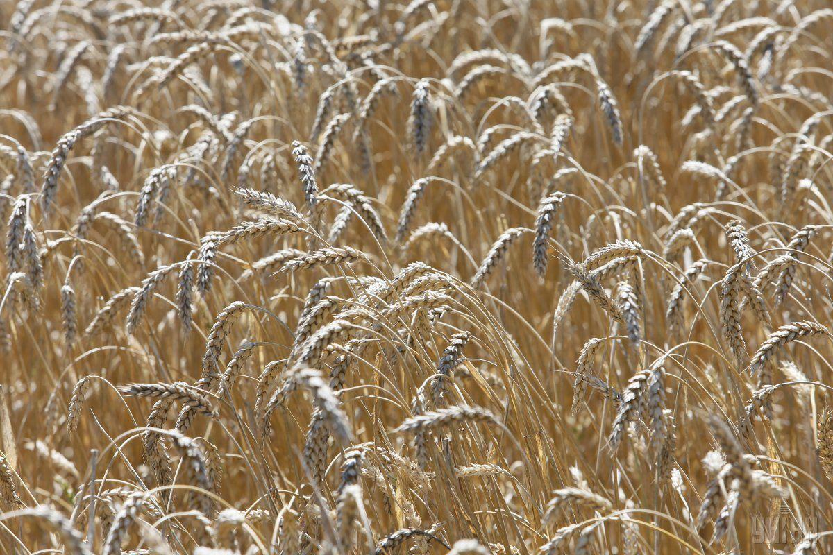Минагропрод: ограничения экспорта зерна не будет / фото УНИАН