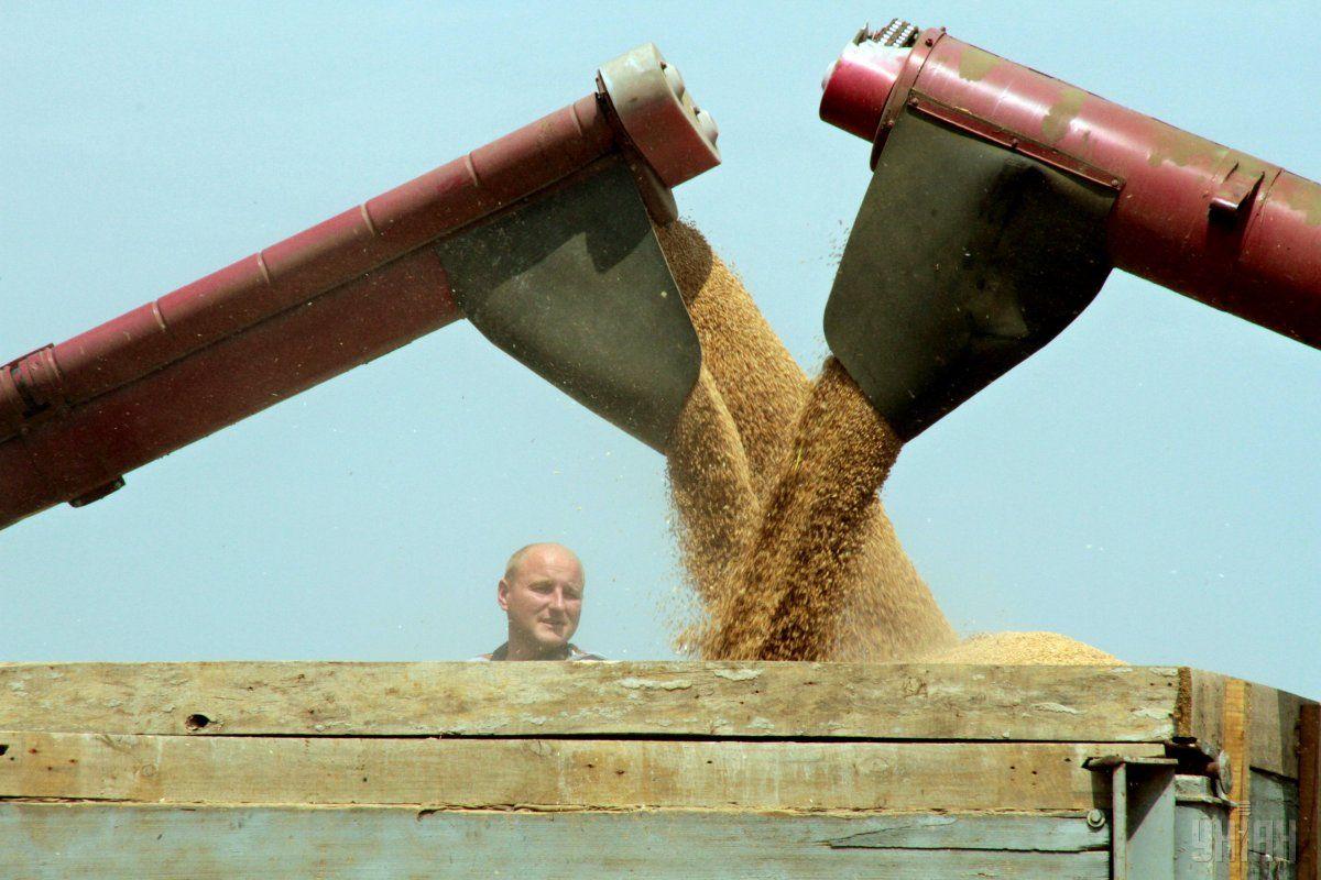 Середня врожайність зернових становить 44,3 центнера з гектара / фото УНІАН
