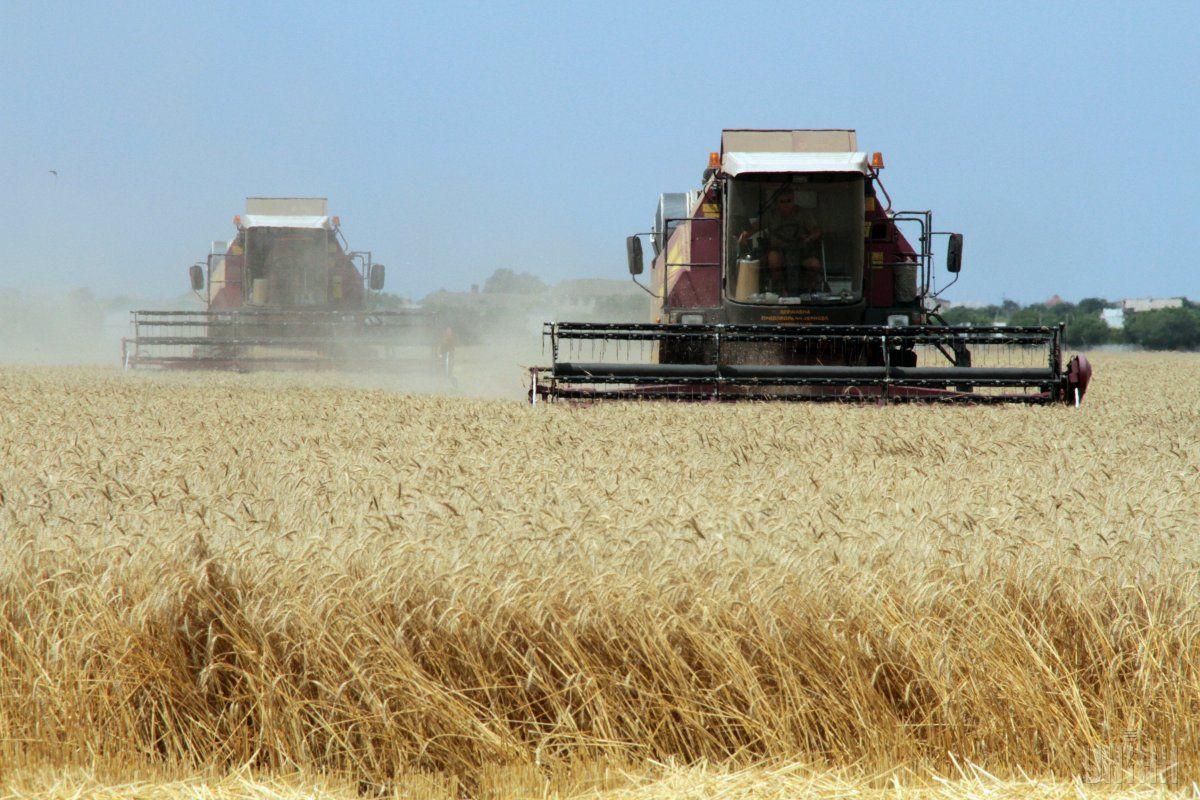 Урожай зібрано з площі 14,6 млн га (96%) / фото УНІАН