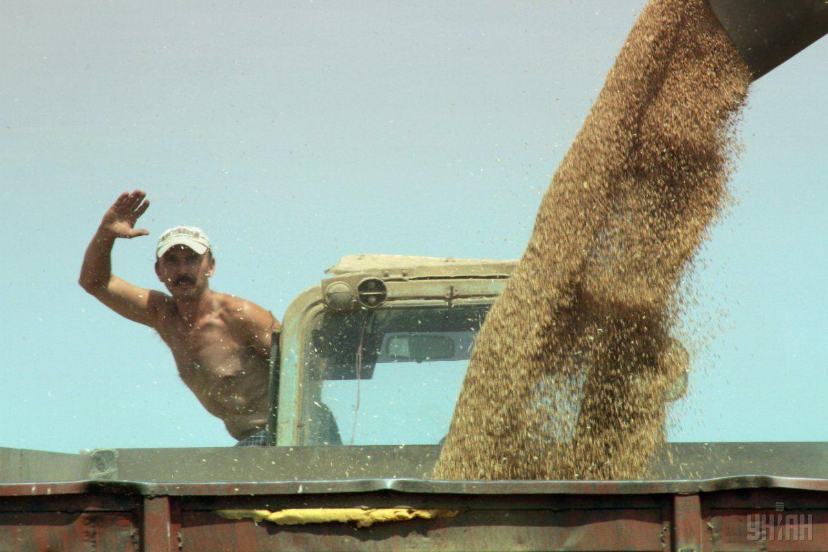 Аграрії зібрали озимої пшениці 23,9 млн тонн / фото УНІАН