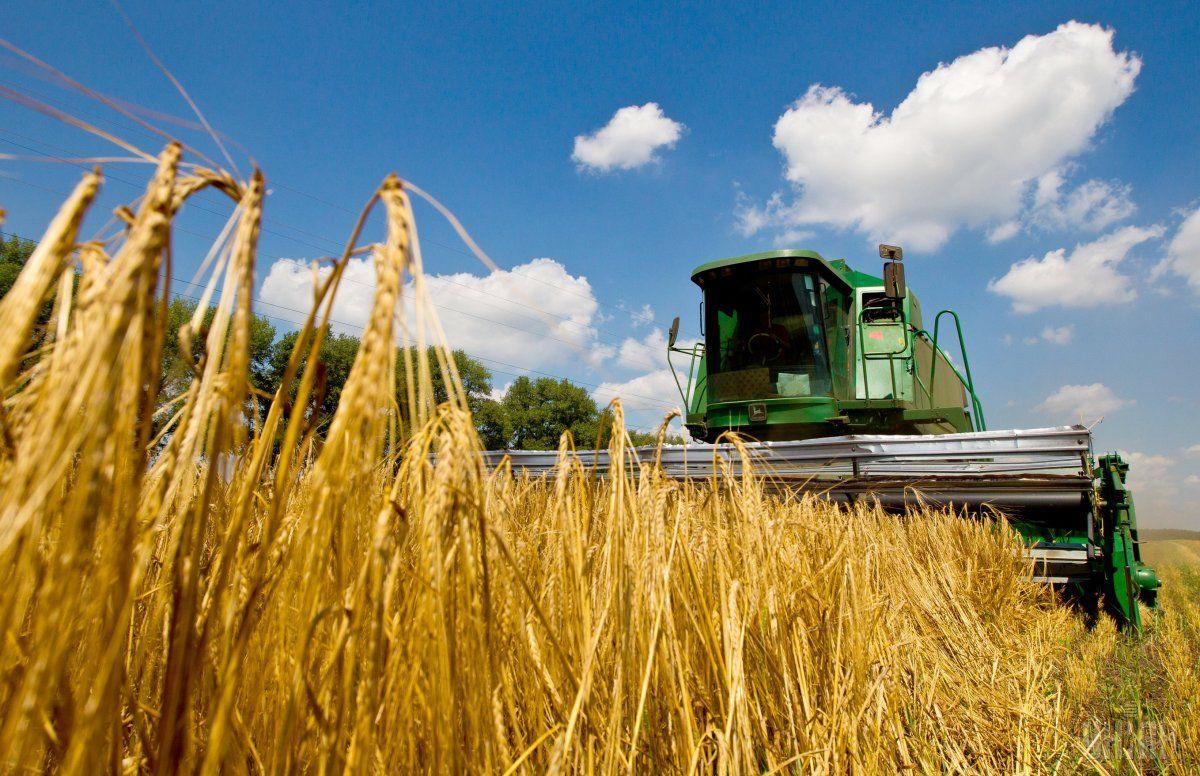 Экспорт зерновых из Украины достиг рекордных 7,2 млрд долл. / фото УНИАН