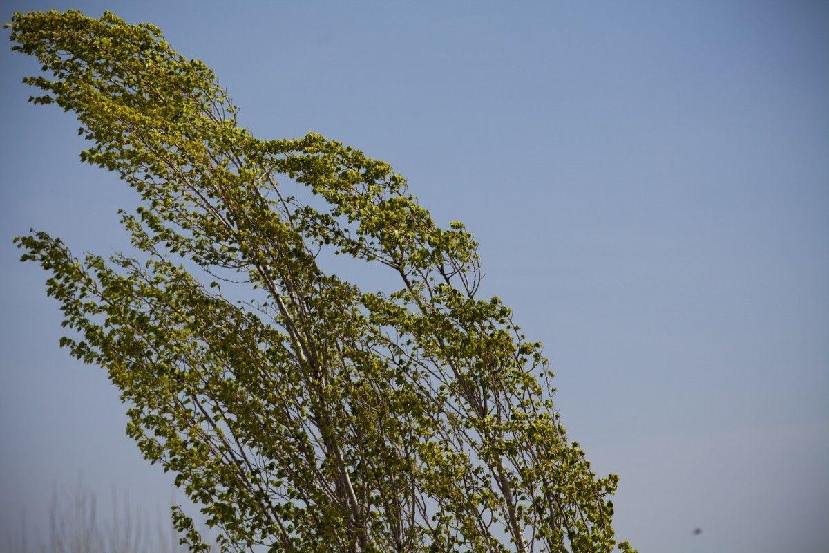 На территории области ожидается штормовой ветер / фото Югополіс