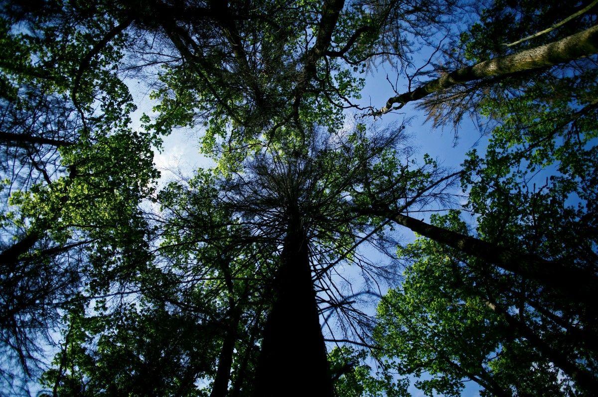 Картинки по запросу австрійський посол про ліс