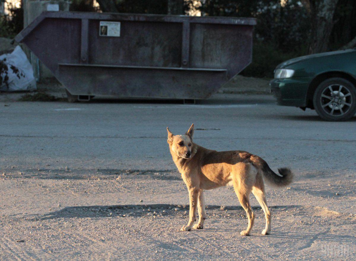 Конфлікт почався після того, як загавкав пес / фото УНІАН