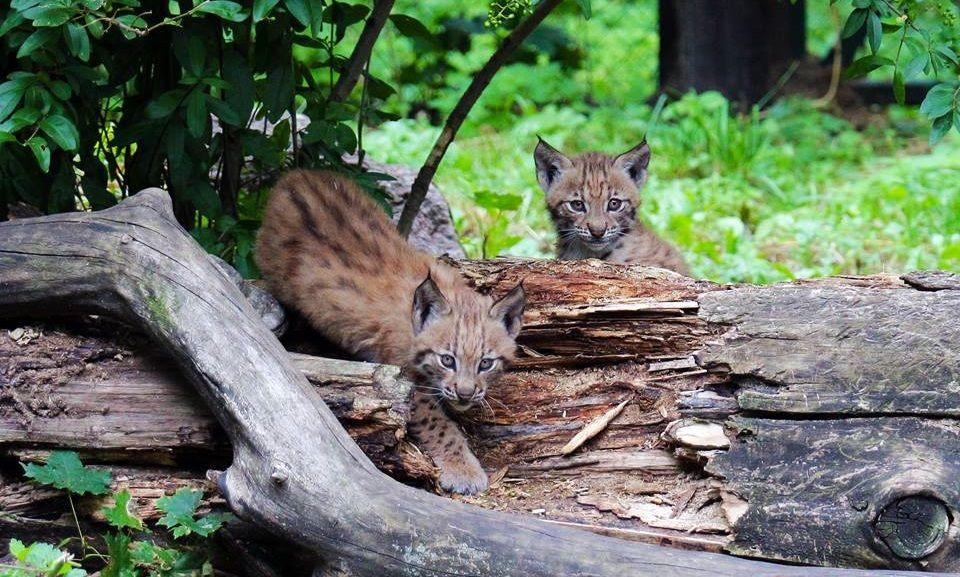 Киевский зоопарк присоединился к празднованию Всемирного дня животных / Фото facebook.com/zoo.kiev.ua