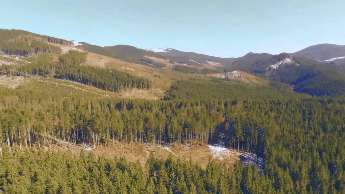 Карпатские леса / Скриншот с youtube.com