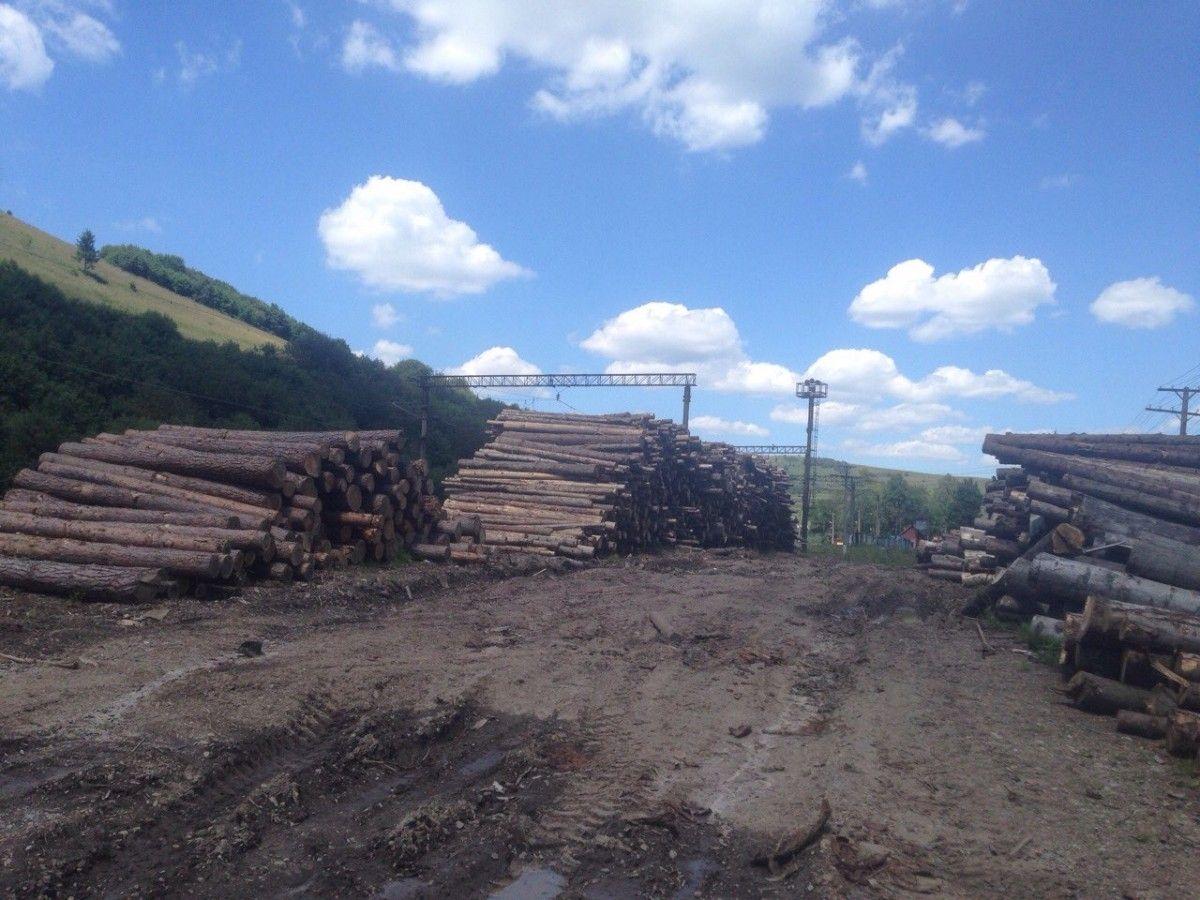 дрова лес вырубка / gp.gov.ua
