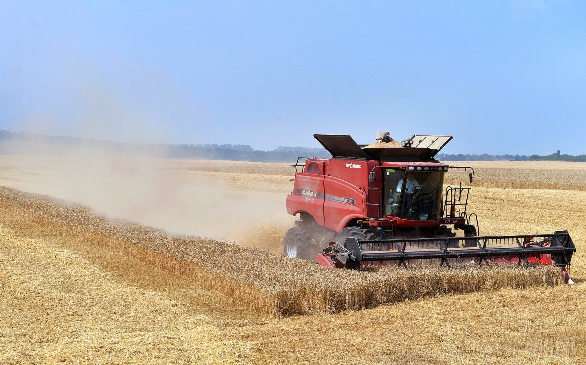 Середня врожайність зернових становить 30,7 центнера з гектара / фото УНІАН