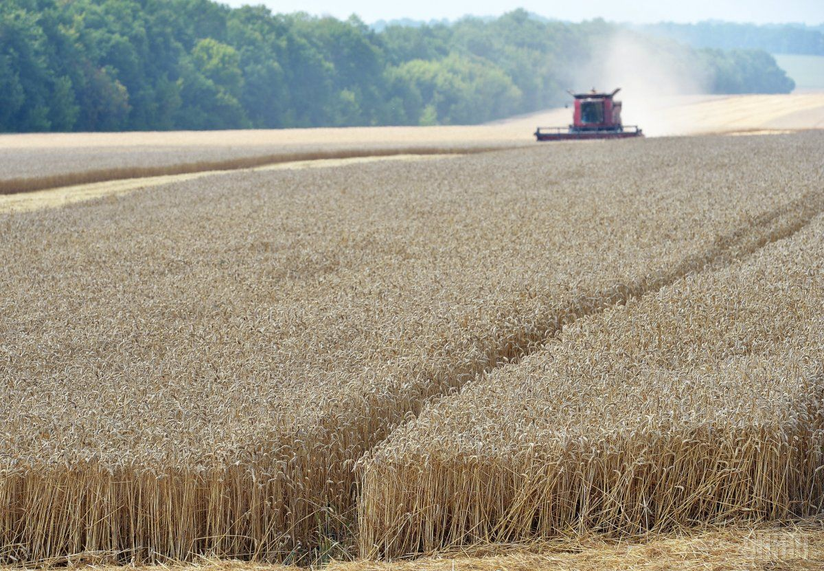 Ukraine may see another record crop this year / Photo from UNIAN