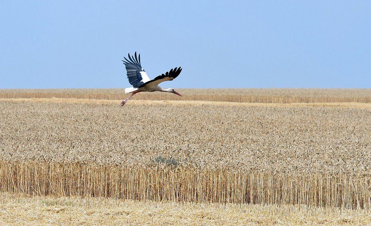 В прошлом году аграрии экпортировали почти 40 миллионов тонн зерновых / фото УНИАН