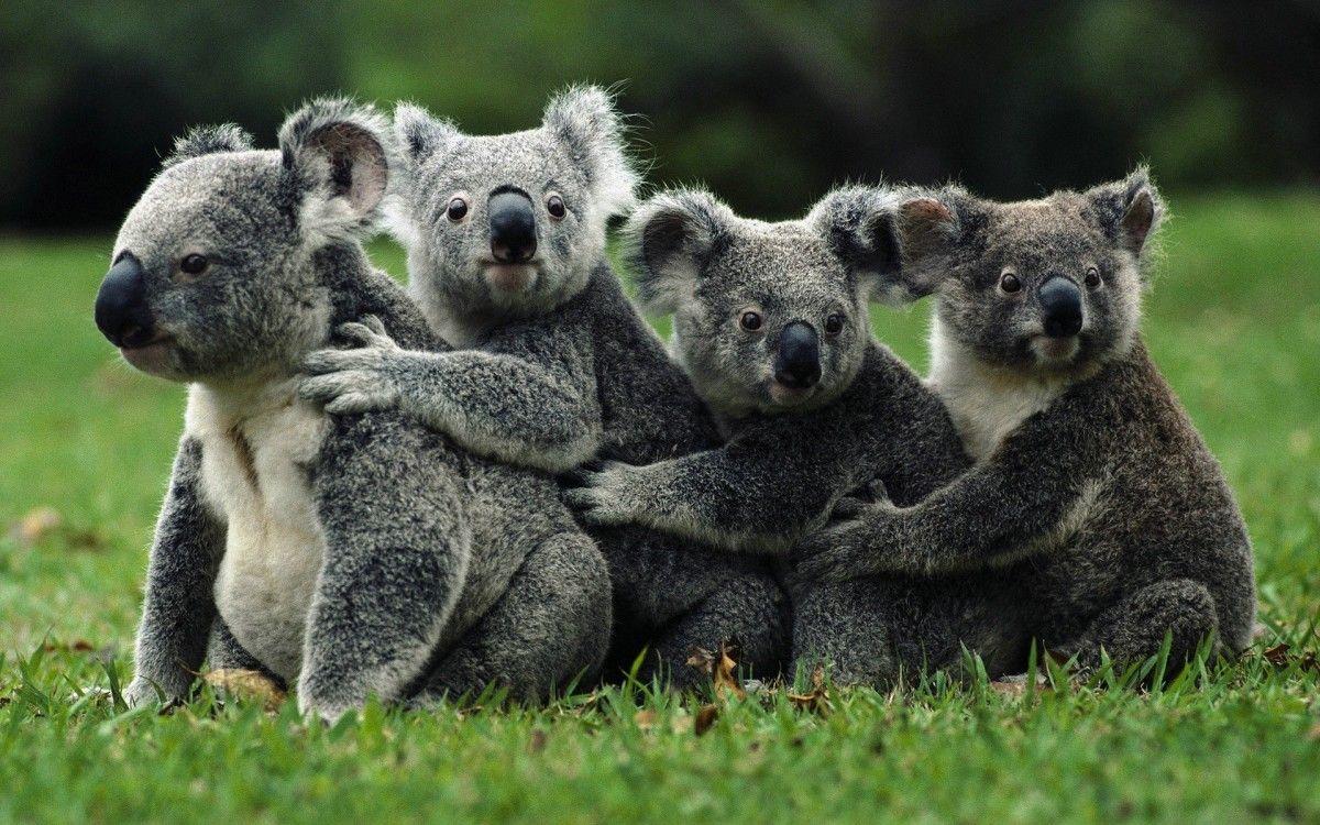@koalathesurvivor