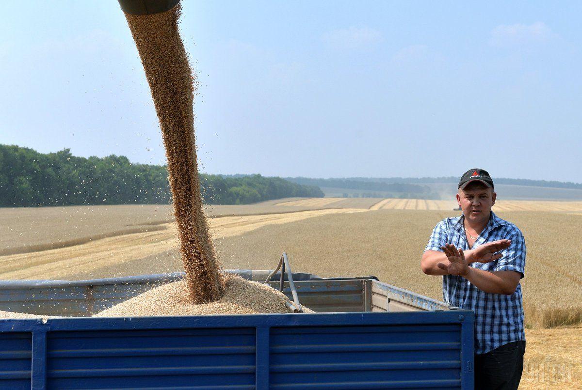 Госстат подтвердил рекордный урожай зерновых в Украине / фото УНИАН