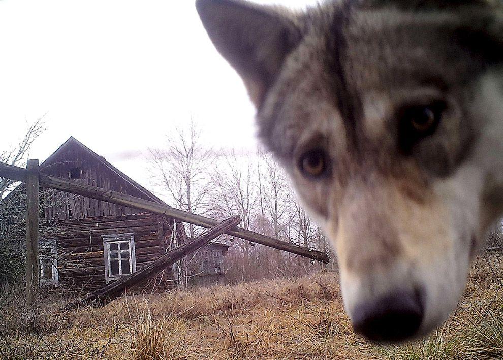 волк / REUTERS