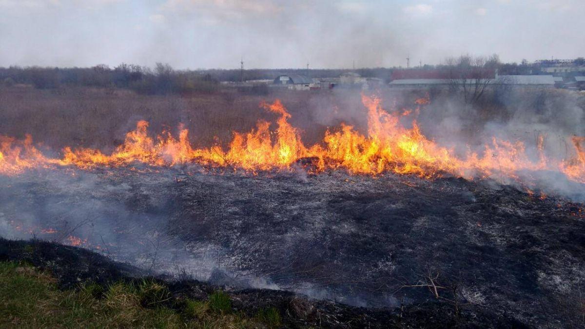 На Тернопольщине горела сухая трава / galinfo.com.ua