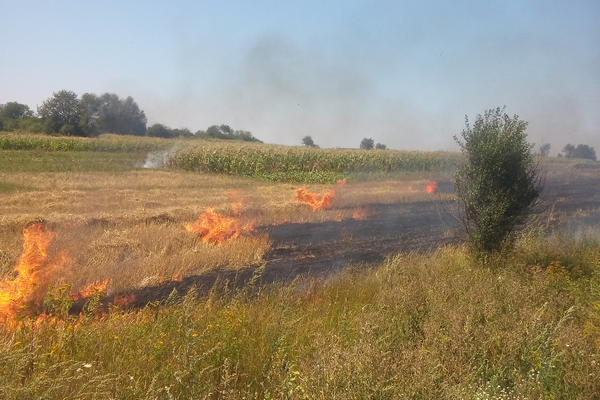 На Херсонщине сгорели 170 гектаров пшеницы / фото ternopil.mns.gov.ua