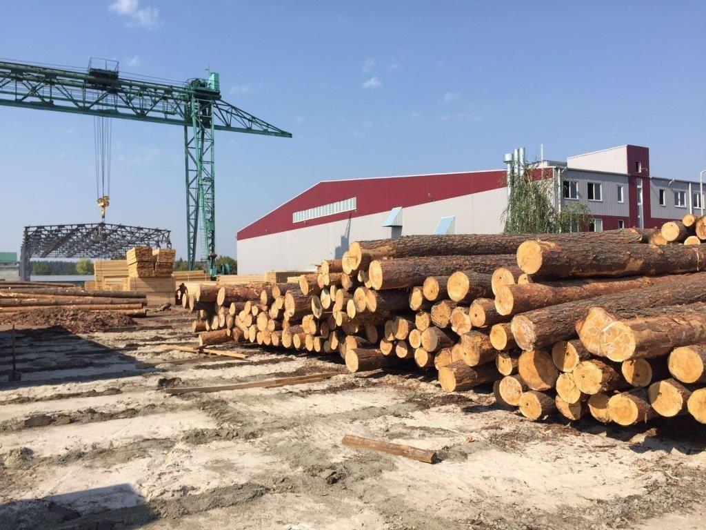 Експорт лісу-кругляка / gp.gov.ua