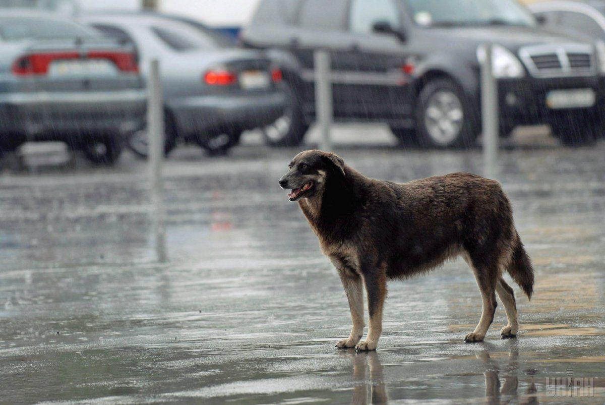 Завтра в Украине местами пройдут дожди / УНИАН